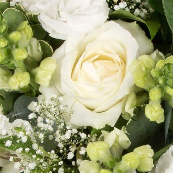 Classical White Posy3